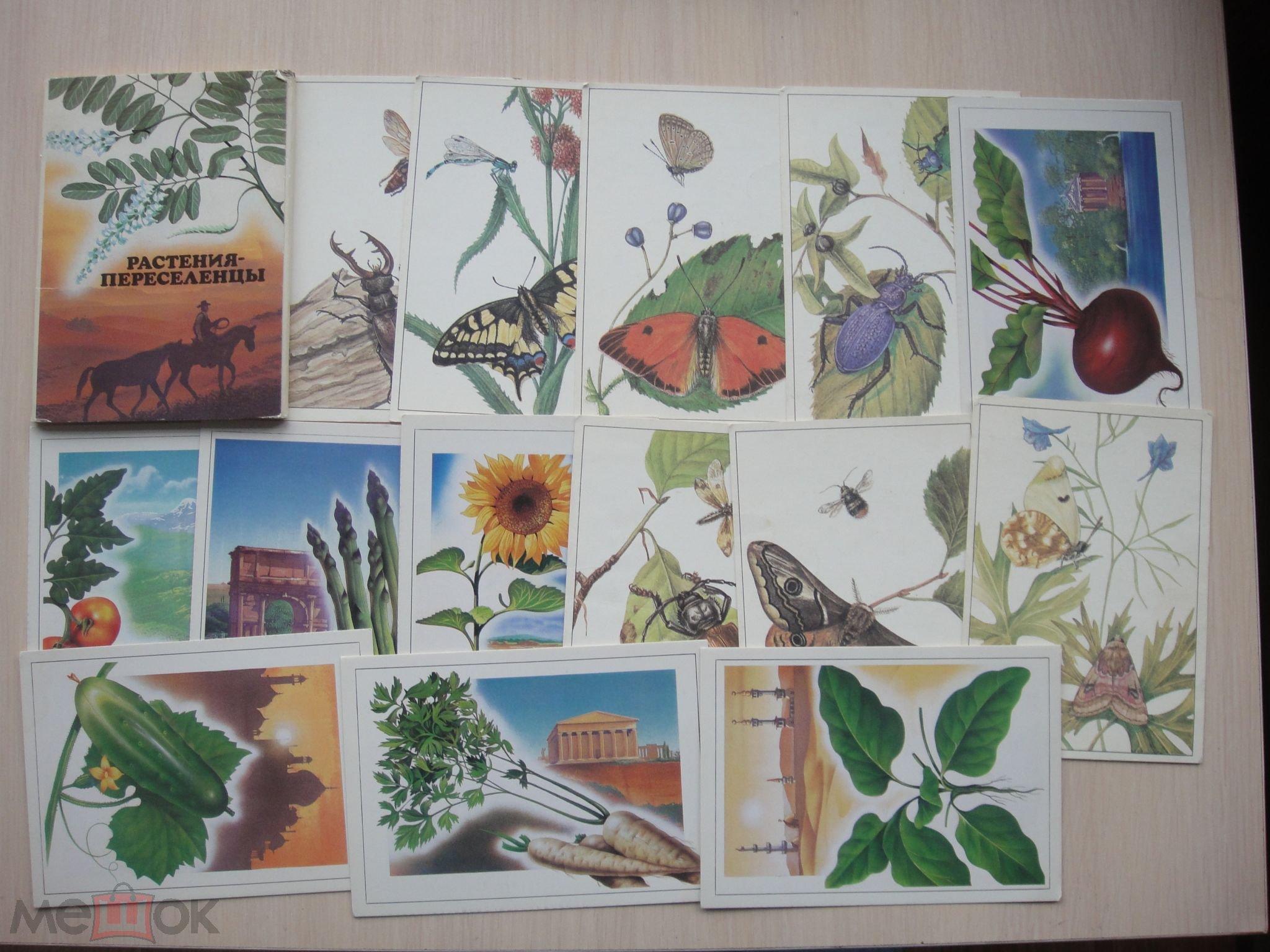 Наборы открыток ссср фауна, сайт визитка открытки