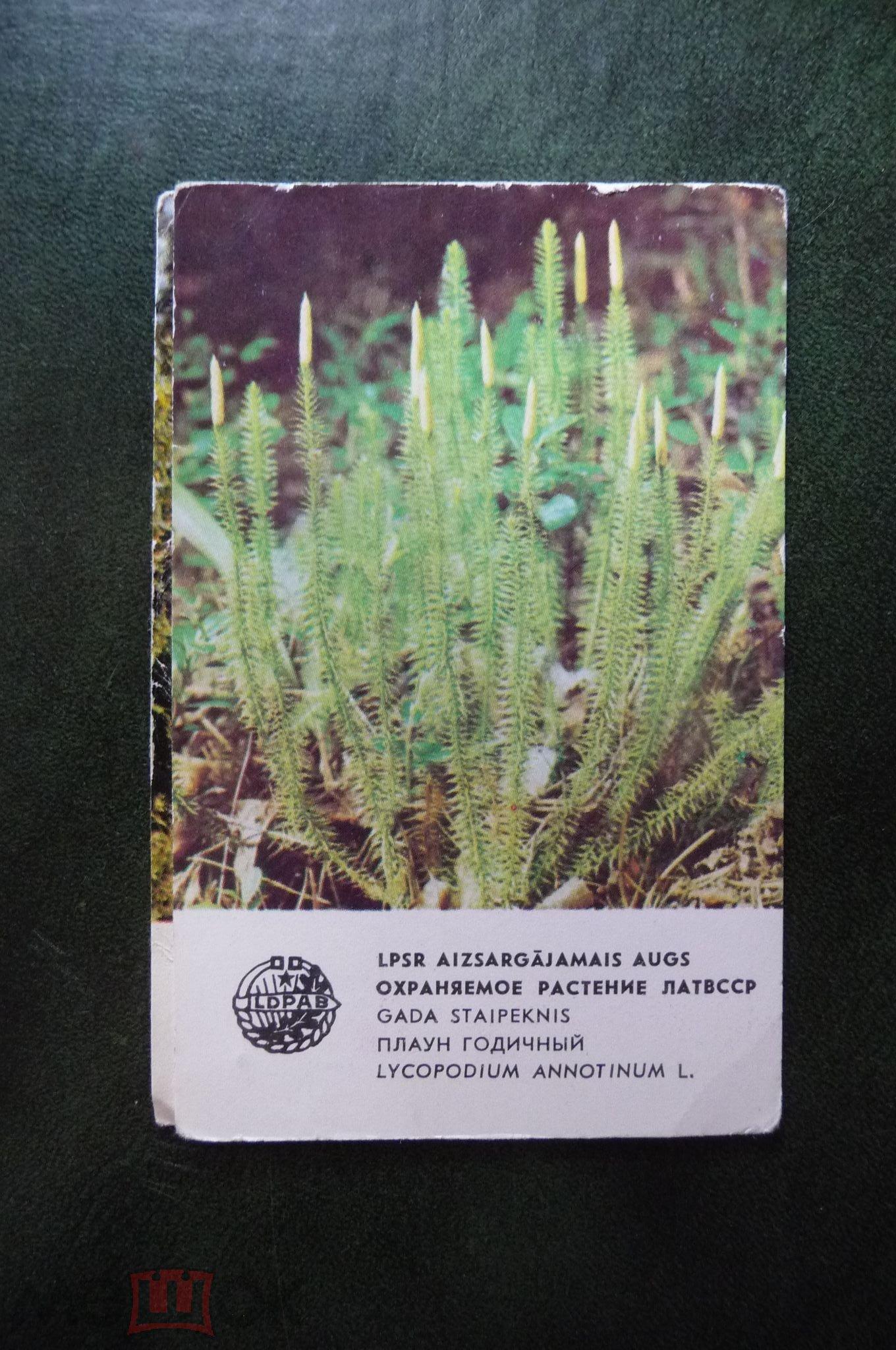 Карманный календарик. Охраняемые растения Латвии.