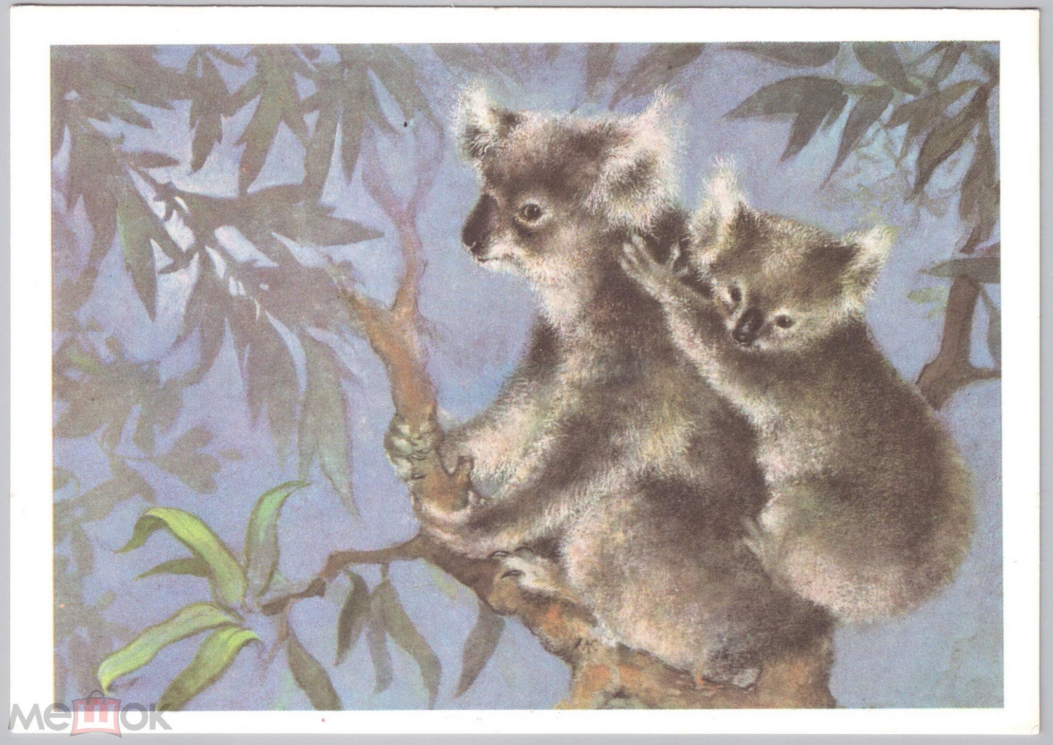 Коала открытка, открытки ромашками
