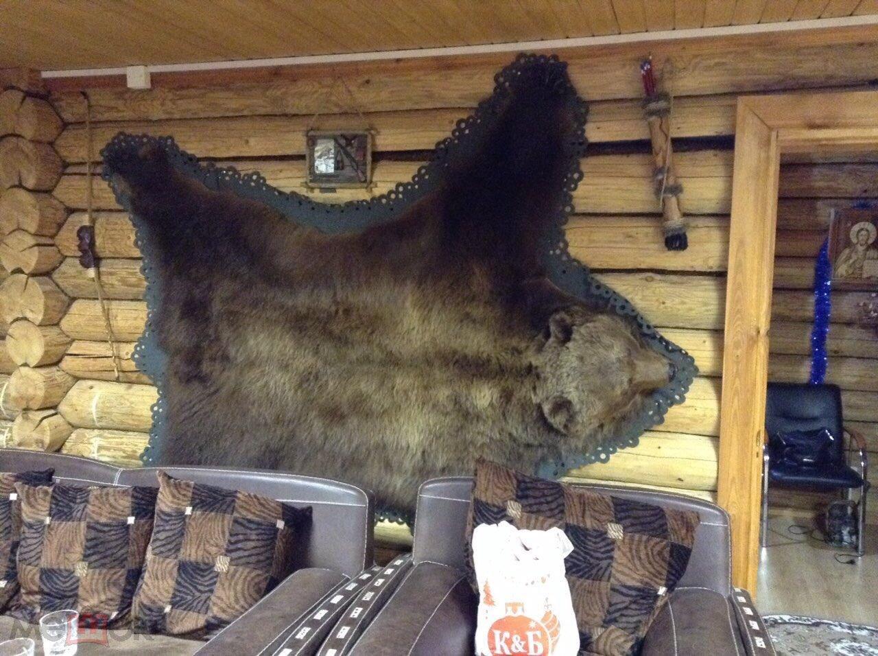 Шкура медведя 230×210 с рубля
