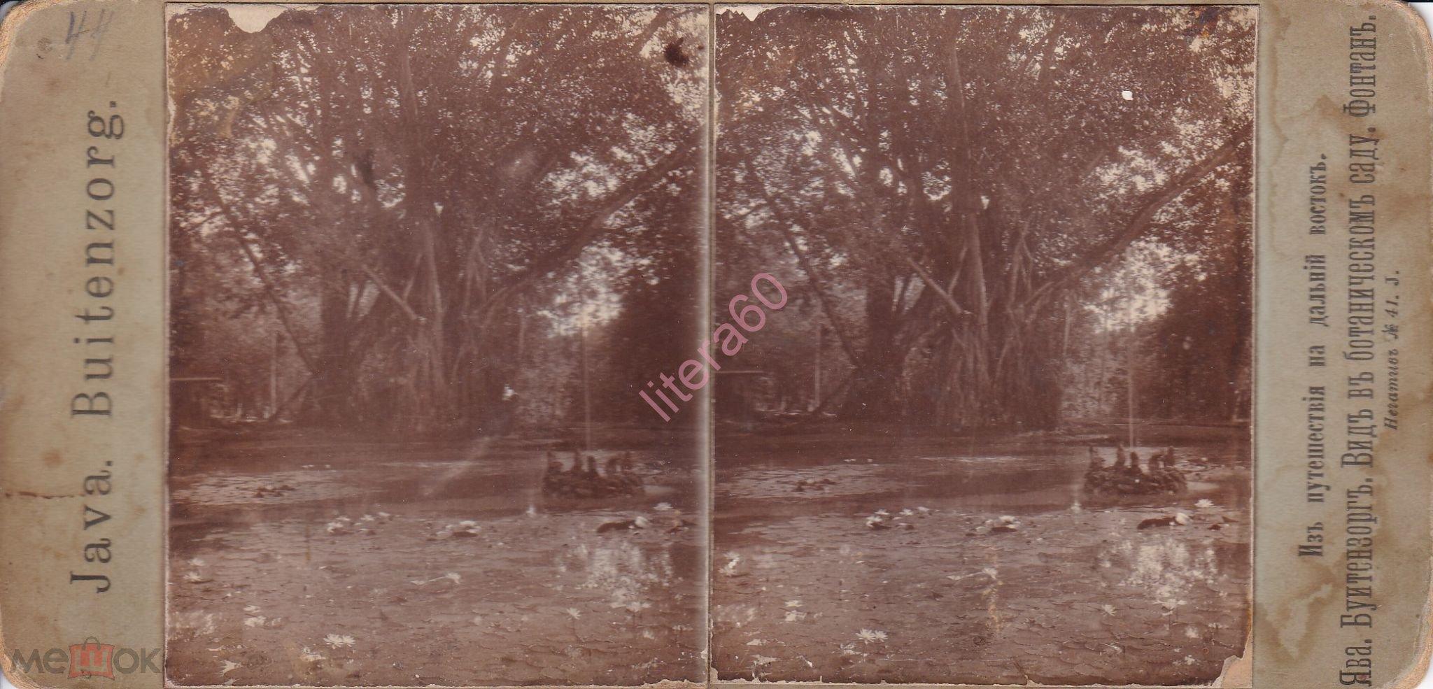 Старинная стерео фотография Вид в ботаническом саду, Ява
