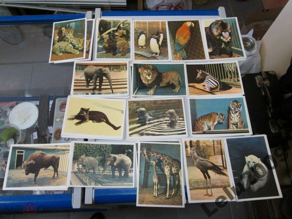 Открытка зоопарк, открытка