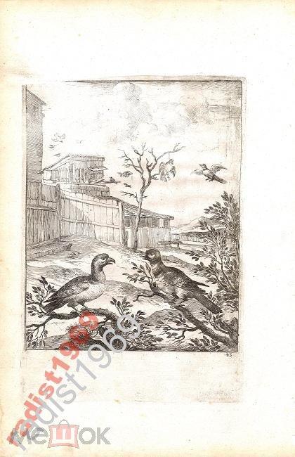 1665 г. БАСНИ ЭЗОПА. ЯСТРЕБ И КУКУШКА. ДИРК СТУП!