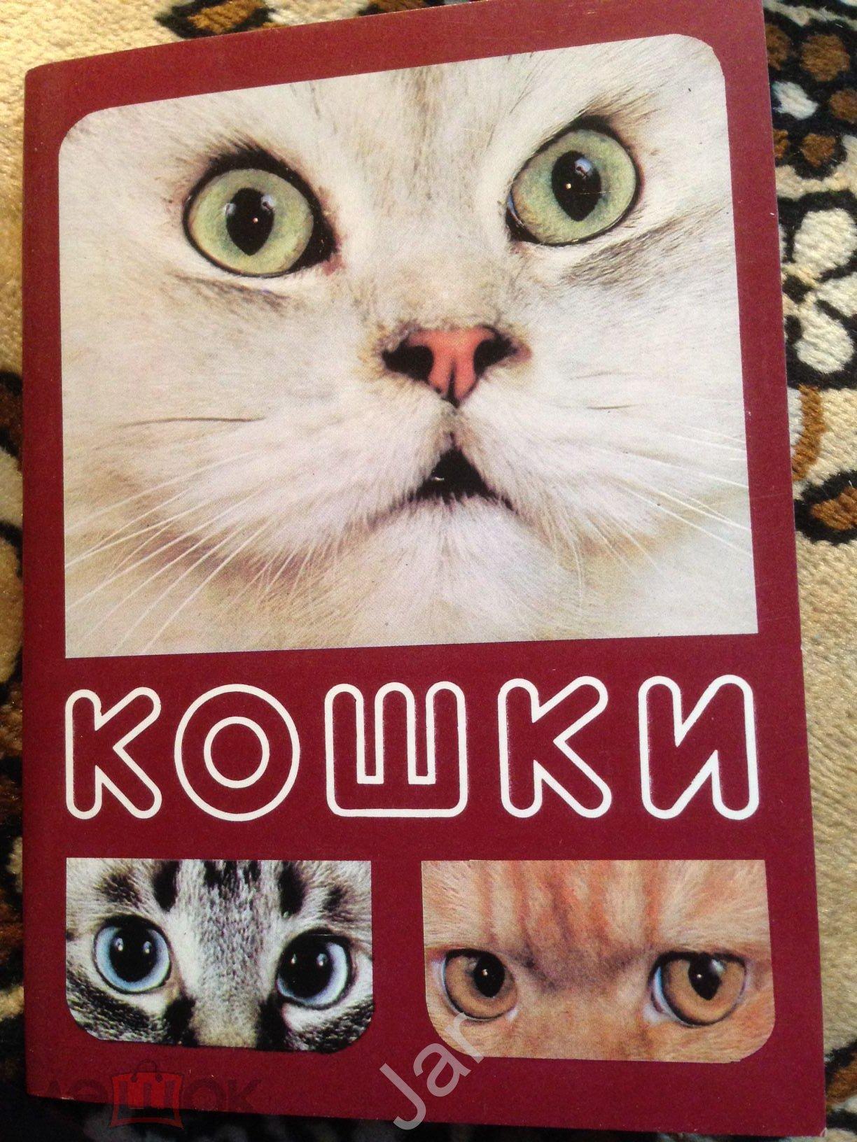Набор открыток кошки