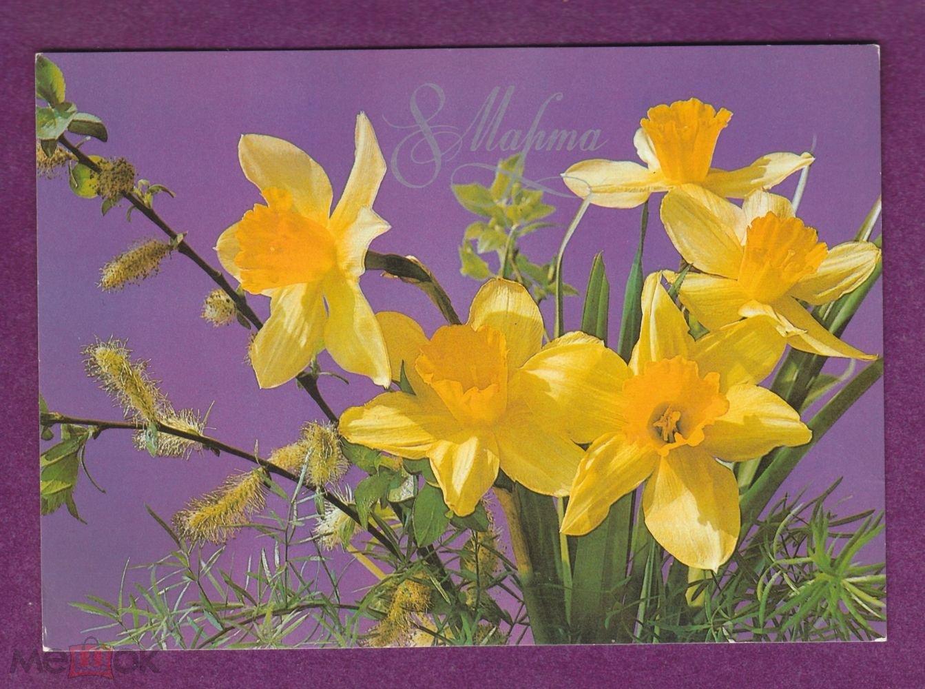 Открытка к 8 марта цветы нарциссы, надписями про