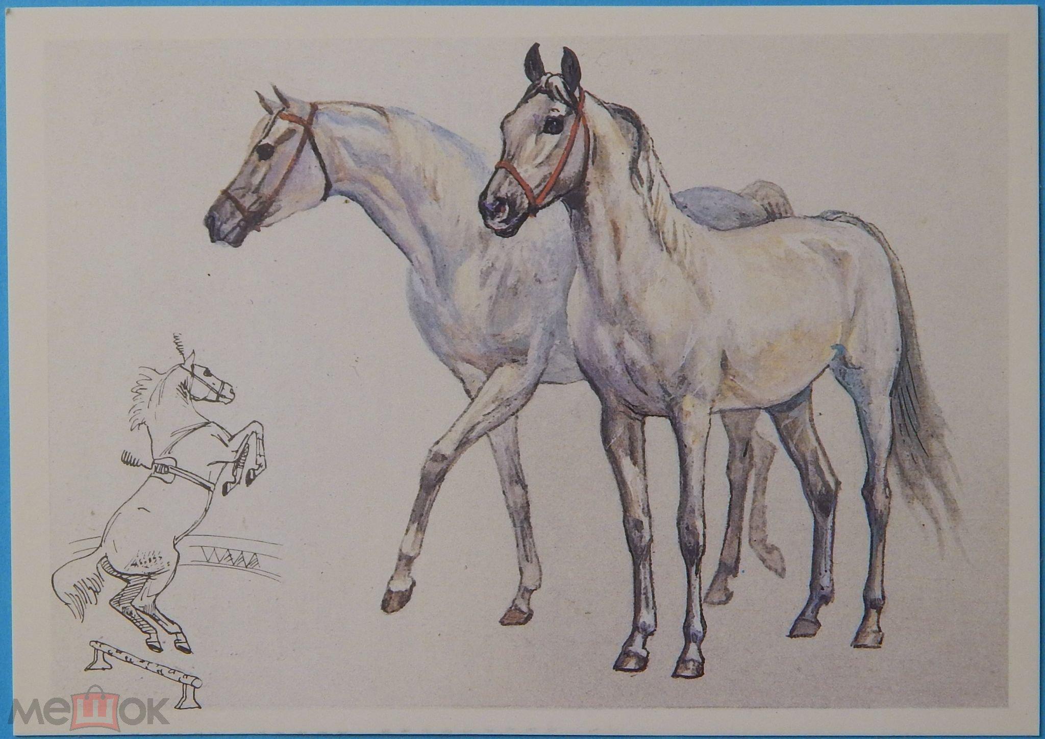 Открытки лошадьми, днем