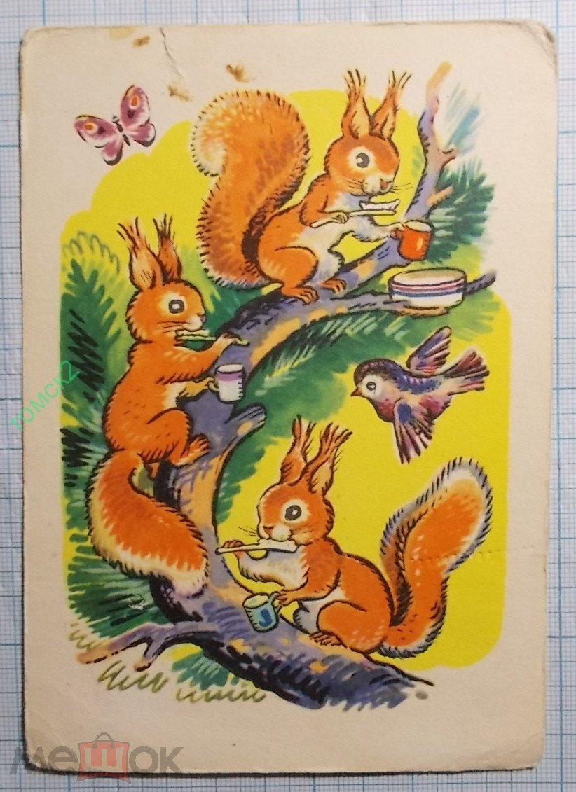 Советские открытки с белочками