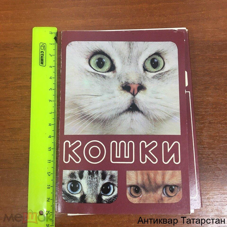 Набор открыток кошки, открытка картинки фильмы